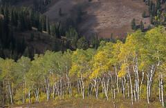 Powder Mountain View (Rick Bolin) Tags: photography utah photo photographer photos ogden powdermountain intelguy rickbolin