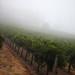 2012 Munselle Merlot Harvest 0002