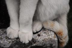 Paws & tail (_MissMoneyPenny_) Tags: red white cat tail paws rosso gatto bianco striped coda zampe tigrato