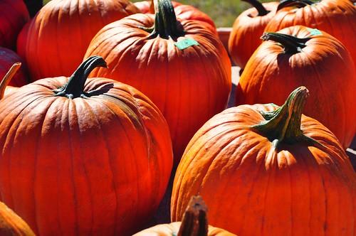 Pumpkins _2012_09_23_12-14-07_DSC_2622_©LindsayBerger2012