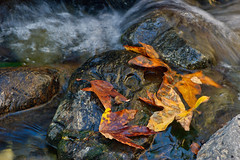 Sequoia National Park (Kari Siren) Tags: park water leaves stone national sequoia