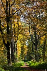 Autumn colors (BraCom (Bram)) Tags: wood autumn trees holland forest canon bomen path herfst pad nederland thenetherlands venlo bos limburg canoneos5d canonef24105mmf4lisusm zwartwater theunforgettablepictures bracom bramvanbroekhoven