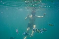 DSC09576 (andrewlorenzlong) Tags: fish swimming swim thailand snorkel andrew snorkeling kohchang kohrang kohrangyai korangyai