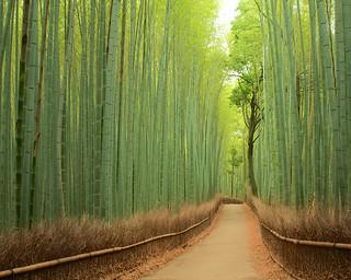 竹林の道 - 嵯峨野 / Bamboo Street - Sagano
