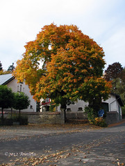 Colors of Autumn ( Annieta  Off / On) Tags: oktober holiday color tree nature canon germany vakantie geocaching herbst herfst natuur boom powershot automn s2is couleur allrightsreserved meschede duitsland farben sauerland kleuren hennesee eslohe autumne annieta goldstaraward usingthispicturewithoutmypermissionisillegal