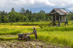 ChiangRai_2678 (JCS75) Tags: asia asie thailand thailande canon chiangrai