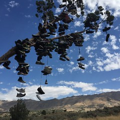 395 Shoe Tree  RoadTrip 2From OLYMPIA SEPT 2016 (GCRad1) Tags: 395 shoe tree roadtrip 2from olympia sept 2016