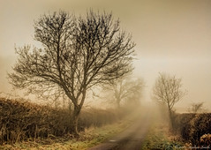 Misty Road (Ninja Dog - ) Tags: 2015 march spring geddington northamptonshire eastmidlands england english uk grangeroad landscape rural nature natural mist misty earlymorning trees hedgerows countrylane colour muted subtle mon