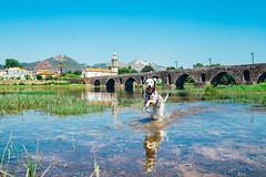 Having fun! (Leo Hidalgo (@yompyz)) Tags: canon eos 6d dslr reflex yompyz ileohidalgo fotografa photography vsco portugal travel dog perro animal dalmatian dlmata