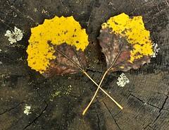 The feeling of autumn (tonibjrkman) Tags: autumn 2016 camera feel yellow suomi syksy finland nature luonto ruska vrit hanko raasepori etel