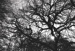 O Licht, geboren aus dem Lichte (amras_de) Tags: baum træ stablo boom árbol drvo arbre strom tree arbo puu zuhaitz crann fa arbore tré albero arbor medis koks tre drzewo árvore àrvulu drevo träd agaç licht luz lig svjetlost llum svetlo lys light lumo valgus argi valo lumière solas fény lumine ljós luce lux liicht šviesa gaisma lutz swiatlo lumina luci svetloba ljus isik