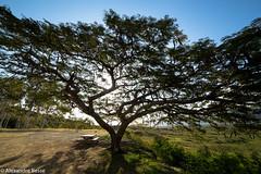Arbres - Nouvelle Caldonie (alexandre_besse) Tags: nouvelle caledonie new caledonia noumea nature naturel paysage ciel arbres vert espace majestueux grands focal fixe 14mm