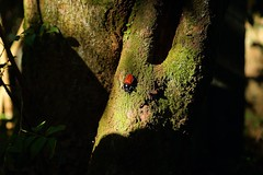 Neolucanus doro (usaf182) Tags:  neolucanus doro bug