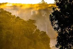 The golden Mists of Iguacu (*Capture the Moment*) Tags: sunset sun sonynex7 sonye18200mmoss sonnenuntergang sonne mist landschaften jungle iguacu goldenestunde goldenhour fozdeiguazu fog bume wetter brazil waterfalls brasilien wassernebel 2016 wasserflle urwald trees