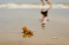 (SarahNaid) Tags: ocean blue brown seaweed reflection beach sand wave running jensenbeach
