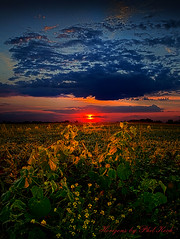 Morning Lit (Phil~Koch) Tags: morning flowers blue autumn winter sunset red portrait orange sun green fall love nature floral field leaves yellow vertical wisconsin clouds sunrise photography landscapes office spring twilight peace seasons earth farm horizon scenic meadow inspired naturallight farmland photograph serene agriculture inspirational nationalgeographic horizons environement summerspring philkoch myhorizonart