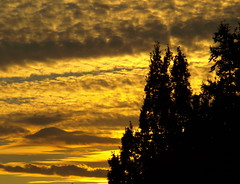 GOLDEN SUNSET (ikan1711) Tags: trees sunset sky nature skies sunsets beautifulnature goldensky beautifulsunsets allnature goldensunsets allsunsets allskies