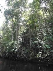 Viajando entre a aldeia Kato e Jacareacanga - rio Kabitutu       DSC06572 (Wilmar Santin) Tags: brazil brasil brasilien paisagem pa par brasile brsil ribeirinha jacareacanga munduruku mundurucu paisagemamaznica amazonica paisagemribeirinha paisagem kabitutu cabitutu ribeirinha amaznica paisagemribeirinhaamaznica