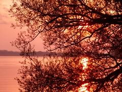 Dark-Branch-Sunset