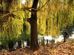 Fishing under a Weeping Willow (Habub3) Tags: city travel autumn people holiday tree fall nature water leaves river germany deutschland search fishing reisen flora nikon wasser europa europe urlaub herbst natur stadt reflexions b