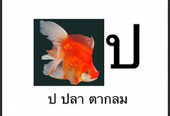 ป ปลา ตากลม