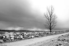 Camino (Sonia Montes) Tags: trees bw naturaleza white black tree byn blancoynegro argentina canon rboles paisaje bn rbol montaa soniamontes