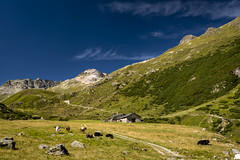 Alp Suvretta (PhiiiiiiiL) Tags: sky mountain berg landscape schweiz switzerland nikon cows suisse hiking himmel hike berge hut val grn blau landschaft alp wandern tal khe wanderung graubnden grisons bever alphtte suvretta d800e