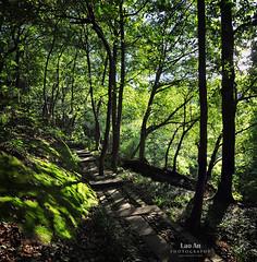 Vertorama - Green Path (Hangzhou) (Andy Brandl (PhotonMix.com)) Tags: china trees sunlight green nature forest square moss nikon asia shadows hangzhou pathway zhejiang baoshishan vertorama photonmix laoan bashishan