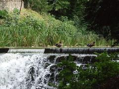 "Sherborne Castle & Garden • <a style=""font-size:0.8em;"" href=""http://www.flickr.com/photos/81195048@N05/8017399603/"" target=""_blank"">View on Flickr</a>"