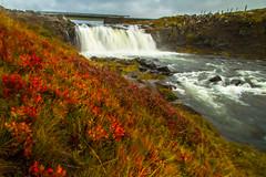 Fallegur foss á Skaga (icecold46) Tags: autumn iceland foss haust haustlitir skagi
