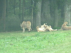 """Longleat Safari Park • <a style=""""font-size:0.8em;"""" href=""""http://www.flickr.com/photos/81195048@N05/8017636061/"""" target=""""_blank"""">View on Flickr</a>"""