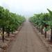 2012 Munselle Merlot Harvest 0018