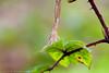 _MG_0431 (Den Boma Files) Tags: fauna dieren kikker amfibieen stropersbos