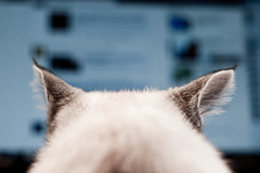 Busters ovana (Peter Hillhagen) Tags: cat facebook fotosondag ovana fs120930