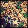 Happy feet (PattyK.) Tags: autumn fall feet leaves photography nikon october europa europe flickr hometown citylife hellas greece grecia balkans griechenland whereilive allstar europeanunion myphotos grece 2012 myfeet mycity fallenleaves ellada ioannina giannina myeverydaylife giannena epirus ελλάδα φύλλα πόδια εγώ ipiros πόλη παπούτσια φθινόπωρο φωτογραφία ιωάννινα γιάννενα ευρώπη jannina jannena ελλάσ ήπειροσ βαλκάνια γιάννινα ευρωπαικήένωση όμορφηπόλη nikond3100 ηπόλημου ταπόδιαμου