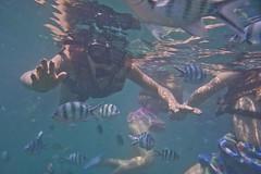DSC09488 (andrewlorenzlong) Tags: fish swimming swim thailand snorkel sam snorkeling kohchang kohrang kohrangyai korangyai