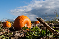 Little Pumpkin (j.elemans) Tags: autumn summer sun holland nature dutch poetry poem sony gelderland a300 bestcapturesaoi mygearandme mygearandmepremium mygearandmebronze mygearandmesilver mygearandmegold blinkagain rememberthatmomentlevel1 rememberthatmomentlevel2 rememberthatmomentlevel3