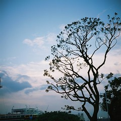 Yamashita Park (hakudai) Tags: 6x6 film japan yokohama texer