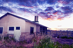Abandoned milking shed (Indigo Skies Photography) Tags: lighting camera old light sunset sky colour building grass clouds digital lens photography milk weeds aperture exposure flickr cattle cows australia victoria colourful dairy echuca milkingshed dairyindustry nikond90 raychristy bamawmextension