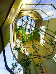 Et la haut il y a quoi ? parc des gants Lille. (fourmi_7) Tags: fleurs ciel monte ouverture grimpe