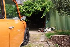 Orange (jessica-h) Tags: car orange barn vehicle tree mini oldcar cornwall calstock wheel