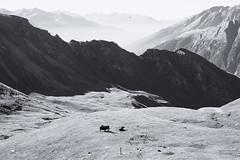 (Paulina Ressing) Tags: grossglockner hochalpenstrasse austria mountains mountain