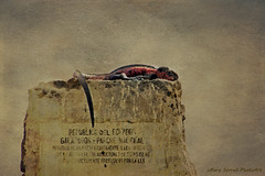Parque Nacional Galapagos (Passion4Nature) Tags: galapagos islands paraquenacionalgalapagos ecuador texture magicunicornverybest marineiguana iguana