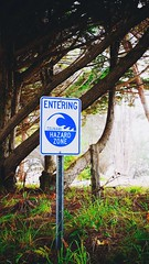 Tsunami Zone, Highway One NorCal (sanyawashere) Tags: branches jungle forest expressivemode lumix microfourthirds gm5 linuxgm5 saturation scenic fog tsunamizone nature trees norcal fortbragg