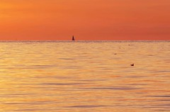 Sailing into the sunset (frankmh) Tags: yacht sailing sail sunset water sea sky resund skne sweden outdoor