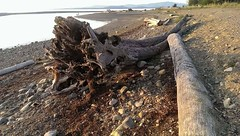 Beautiful Qualicum Beach (Parksville Qualicum Beach) Tags: driftwood beach ocean qualicum qualicumbeach vancouverisland bc canada