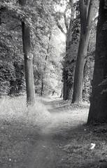 Koln (kaddafi210) Tags: nature trees foma fomapan fomapan100 prakticaplc2 praktica m42 czech kolin city 35mm analog analogue film bw light blackandwhite monochrome forest way tree wild