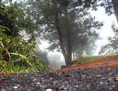 FOG (ValeriaCamarda) Tags: natura nature green fog sicily igers volgosicilia etna volcano mountain landscape canonphoto canonpic