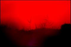 20160818-205 (sulamith.sallmann) Tags: natur pflanzen blur effect effects effekt filter folientechnik grser nature plants red rot unscharf frankreich fra sulamithsallmann