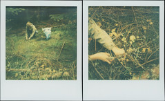 In The Spruce Forest Diptych 1 (sycamoretrees) Tags: 600 analog beta chanterelle color600 color600201603 film forest girl impossible instantfilm integral integralfilm marianrainerharbach mushrooms polaroid slr680 spruce woman